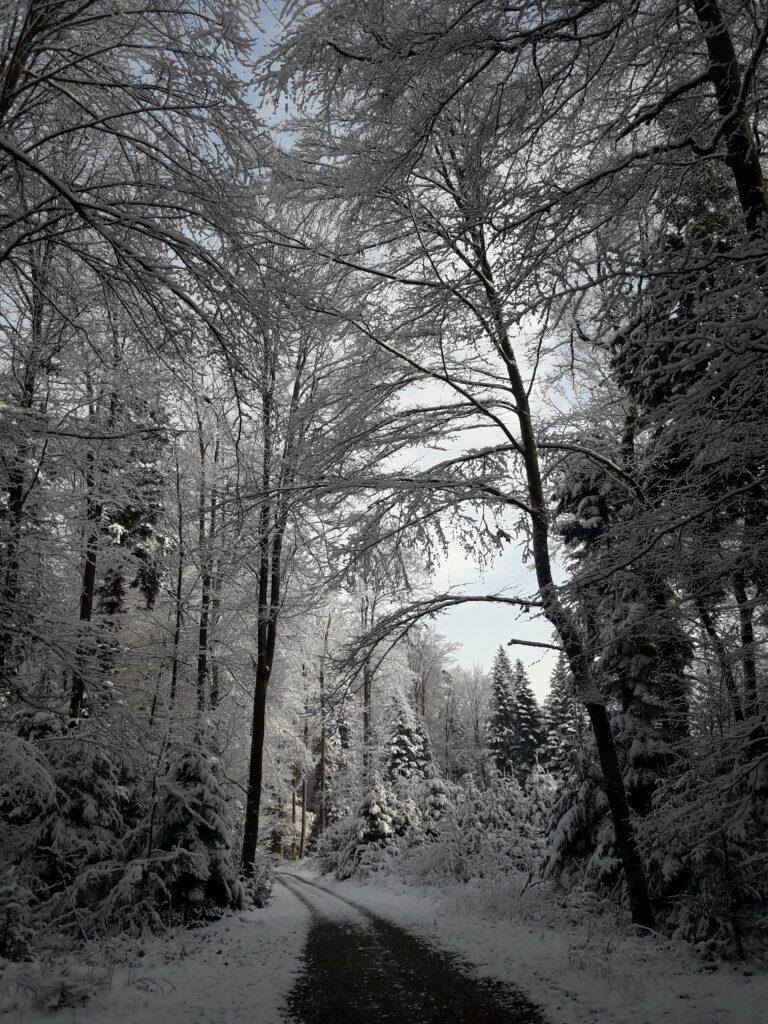 Winterwonderland Munibärg zwischen Aarwangen und Wynau